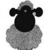 czarna_owca